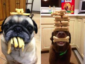 据说狗狗可以抵御住食物的诱惑 铲屎官小试一下