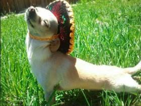 让这些喜欢阳光的狗狗 来温暖你的心窝