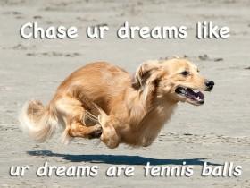 13只狗狗分享它们快乐的原因 值得我们学习