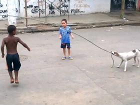 巴西贫民窟让人感动的一幕 流浪狗用嘴拉绳帮孩子玩耍