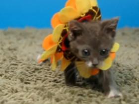 猫咪戴上可爱的小帽子后