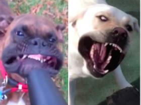 狗狗遇上吹风机