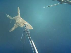 男子在海里遇到一群鲨鱼