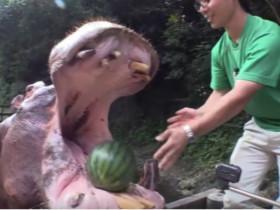 世界上吃西瓜最快的动物