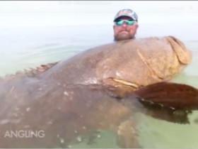 钓到一条180公斤的石斑鱼