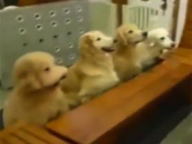 看看主人怎么训练狗狗吃饭 果然是别人家的