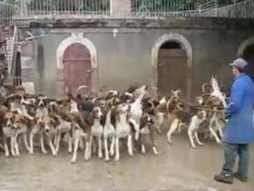 一个人同时给120只狗狗喂食的场景 有些壮观