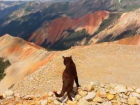 这只猫咪两年半里都在旅行