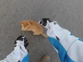 女摩托车手在十字路口救猫咪