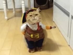 """""""海盗""""猫咪"""