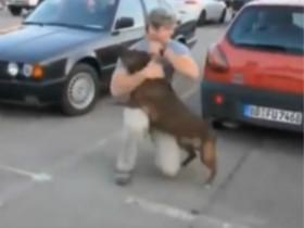欢迎大兵回家的狗狗