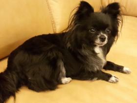 网友分享养狗遇到的挫折和经历 希望新手能引以为戒
