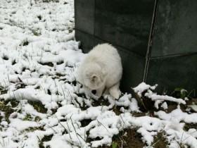 女大学生用照片记录雪后为流浪猫咪搭建爱心小屋的过程