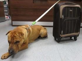 英国一只被遗弃在火车站的狗狗 流下了伤心的泪水