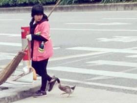 宠物鸭在寒冷的冬天陪主人上班扫大街 场景温暖人心