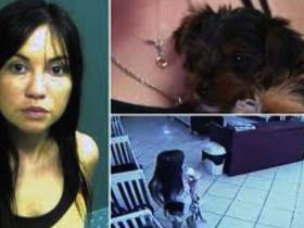 美国25岁女子宠物店偷狗被捕的新闻 上了很多媒体的头版