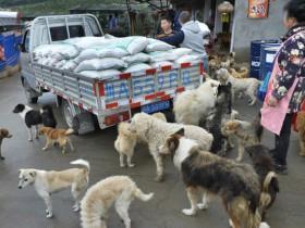 成都大妈救助近5000只流浪猫狗 月花20万