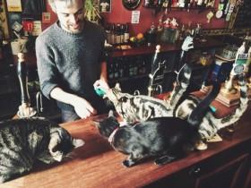 英国的一家猫咪咖啡馆 里面有15只可爱的喵