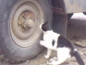 俄罗斯网友拍到了现实版的《猫和老鼠》
