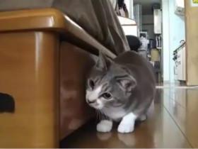 """猫咪玩""""123木头人"""""""