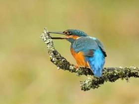 给鸟拍照片按了720000次快门 是什么体验