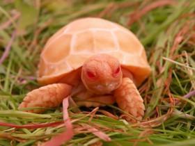 27张可爱的乌龟照片 原来乌龟也萌萌哒