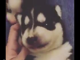 宠物搞笑视频第4期