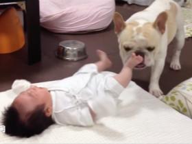 狗狗用自己的方法 来安慰哭泣的婴儿