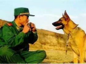 不忍与陪伴自己的军犬道别