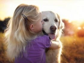 金毛狗狗也有自己的好朋友 这是一件很幸福的事情(27张)