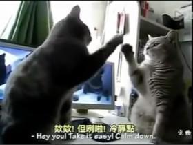 网友给玩耍的两只猫咪配音