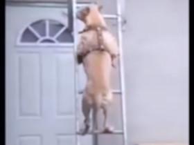 各种动物的搞笑视频合集