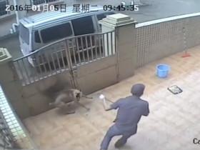 一分钟内翻墙入院偷走两条狗