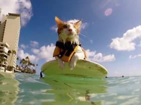 猫咪虽然只有一只眼睛 但却是游泳和冲浪高手