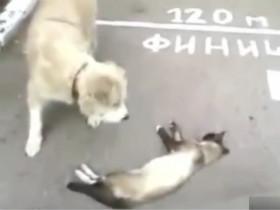 狗狗遇上装死的猫咪