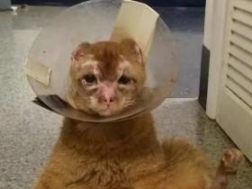 猫咪在人为的大火中严重烧伤 后来它反而帮助了很多动物
