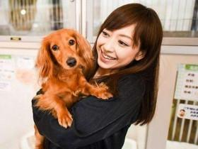 在日本有一家不出售宠物的宠物店 背后有个特殊原因