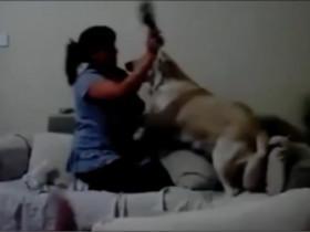 狗狗保护小主人的视频合集 真是操碎了心