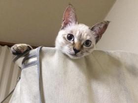 流浪猫咪自己找铲屎官的故事 还好遇到一个善良的人