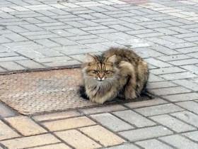 俄罗斯一只猫咪被遗弃在街头 猫咪在那个位置生活了一年