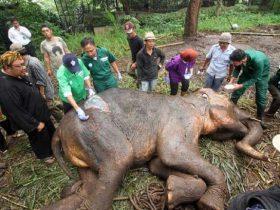 大象是这个世界的自然遗产,它们不应该受到如此伤害