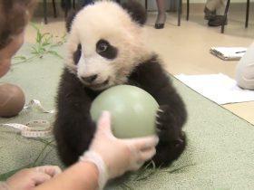世界各国国宝排名,想不到大熊猫竟然如此受欢迎