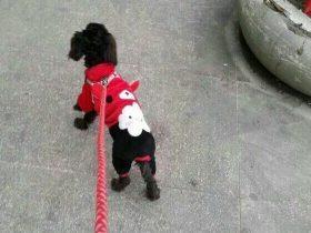 网友分享自己领养流浪狗的故事 真心希望有人能帮她一下