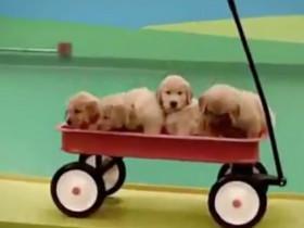 这群狗狗玩出新的高度了