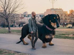 如果腊肠犬变成了大型犬 生活中的场景又会是什么样子