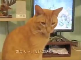 假如宠物能接受人类的采访 它们都说了些什么