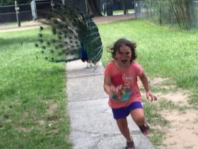 小女孩在动物园被孔雀吓到的照片 被网友进行PS和恶搞