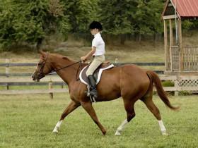 美国野马数量过多且收花费过高 政府建议对45000匹野马实施安乐