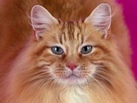 猫咪被箭射穿了头部,好在坚强的它活了下来