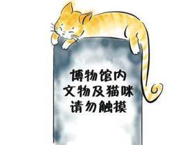 """博物馆的""""网红喵""""要被送走 网友为猫咪求情"""
